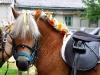 Hier haben wir Pferde für eine Hochzeit schön gemacht...