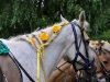 Hier haben wir Pferde für eine Hochzeit schön gemacht. (2)..