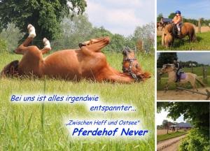 """Postkarte 2 - Hauptmotiv ist hier """"Levin"""", ein Pferd eines Kunden"""