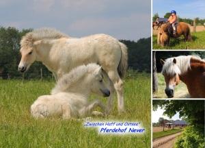 """Postkarte 3 - Hauptmotiv sind hier """"Halla"""" & """"Bolle"""", unsere beiden Fohlen"""