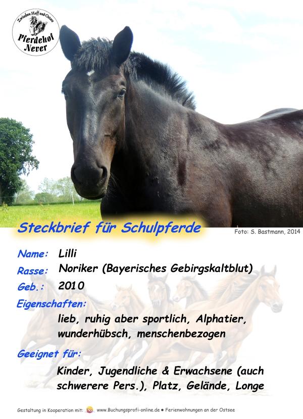 Stecjbrief Schulpferd Lilli